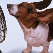 perro-ventilador-750x5001-750x4001-750x400